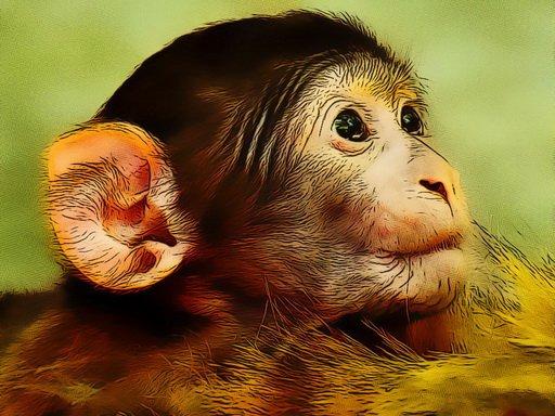 Juega Funny Baby Monkey juego