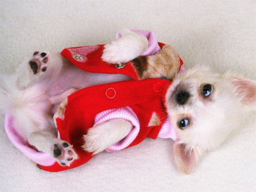 Juega Lovely Puppy Slide juego